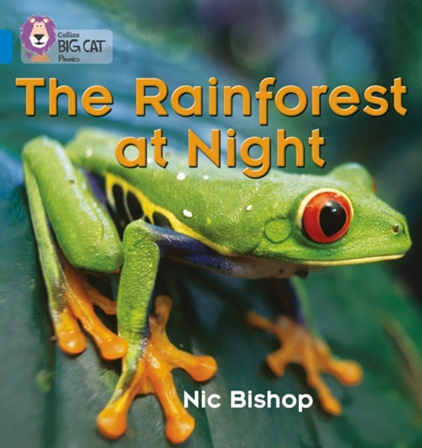 Rainforest at Night