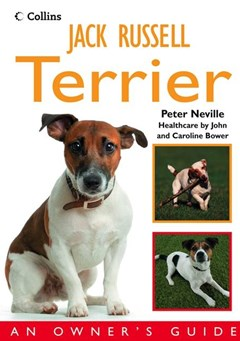 Jack Russell Terrier: An Owner