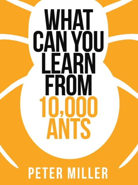 What You Can Learn From 10,000 Ants (Collins Shorts, Book 4)