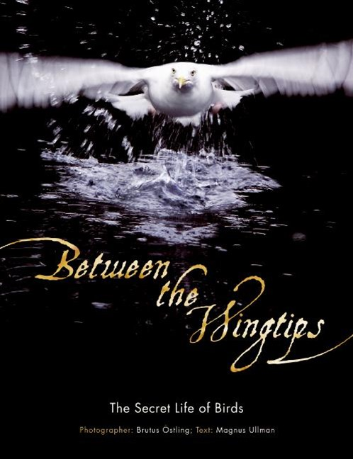 Between The Wingtips: The Secret Life Of Birds