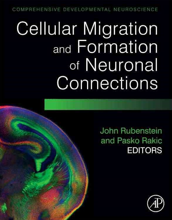 Cellular Migration and Formation of Neuronal Connections