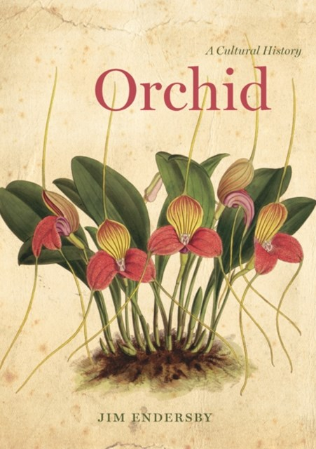(ebook) Orchid