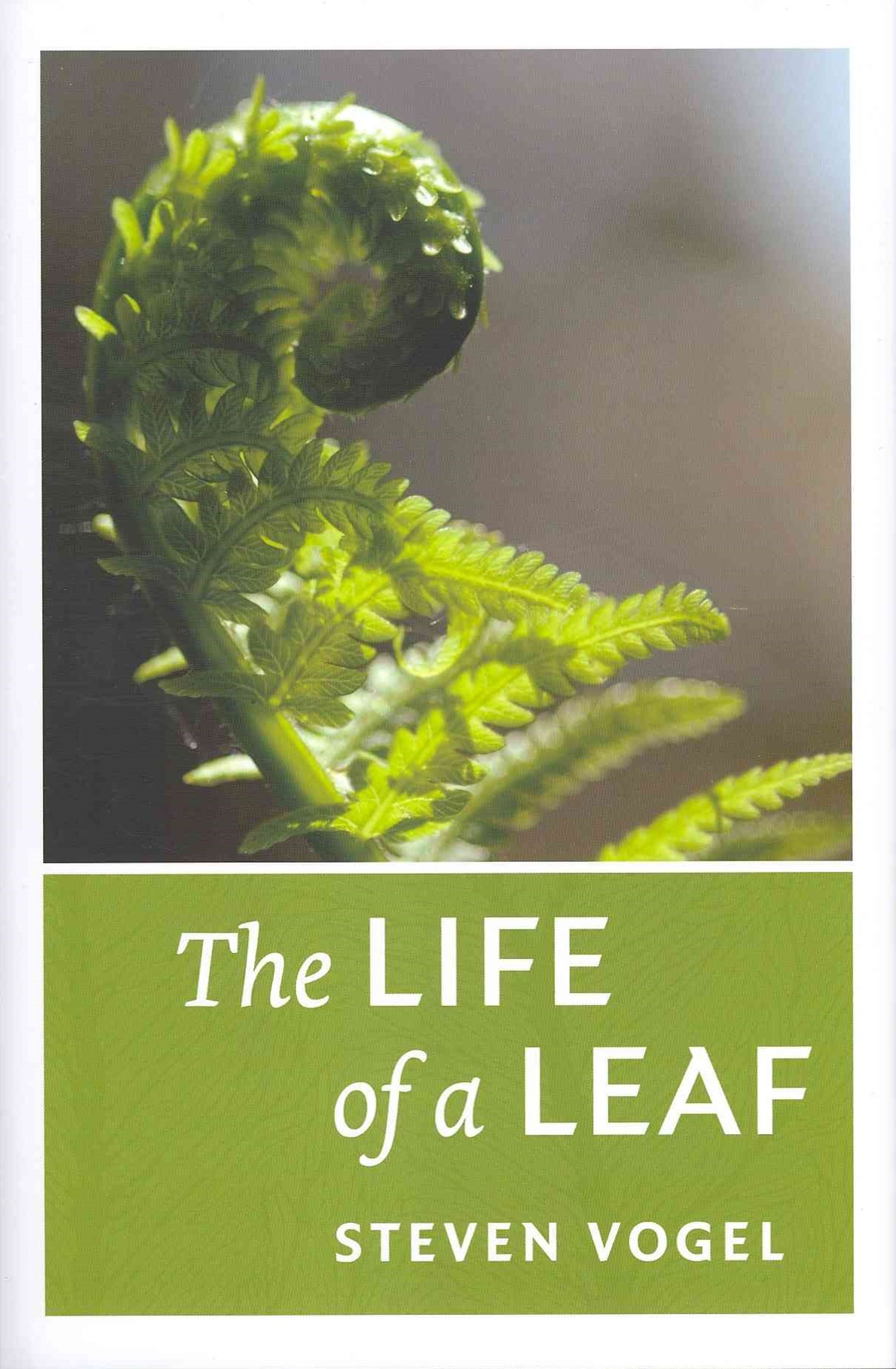 The Life of a Leaf