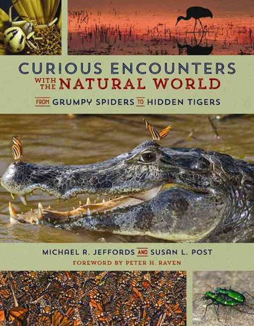 Curious Encounters with the Natural World: From Grumpy Spiders to Hidden Tigers