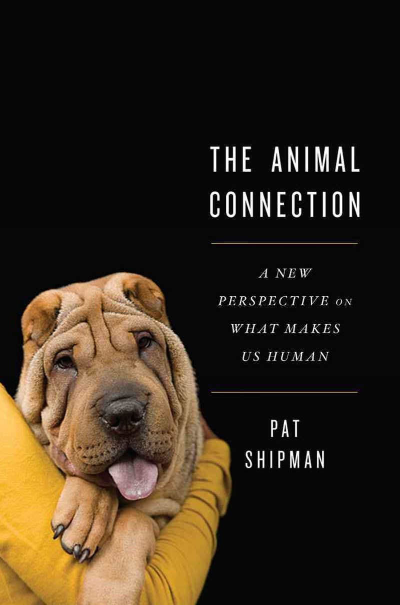 The Animal Connection