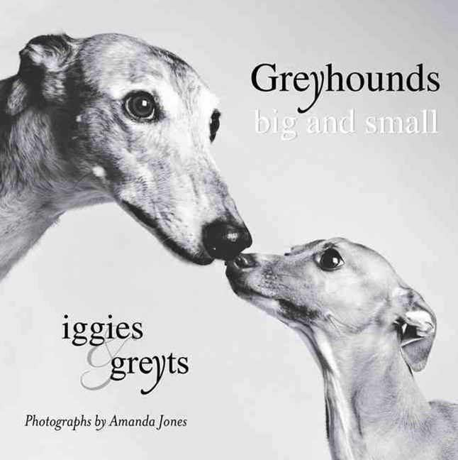 Greyhounds Big and Small: Iggies & Greyts