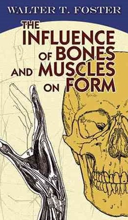 Influence of Bones and Muscles on Form