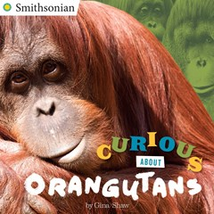 Curious About Orangutans