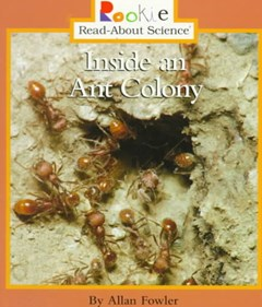 Inside an Ant Colony
