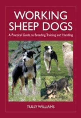 Working Sheep Dogs