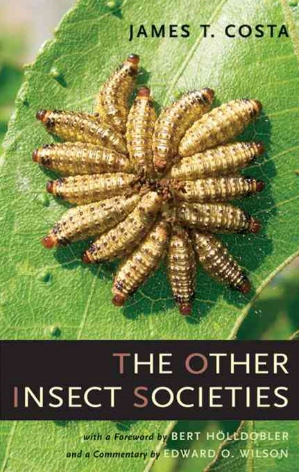 Other Insect Societies
