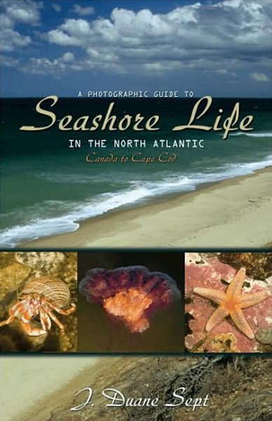 Photographic Guide to Seashore Life in the North Atlantic