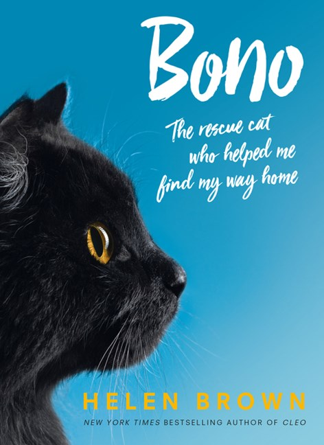 Bono: the rescue cat who helped me find my way home
