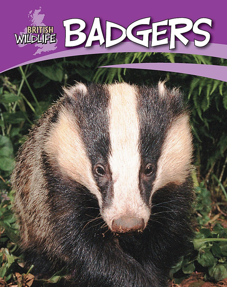 British Wildlife: Badgers
