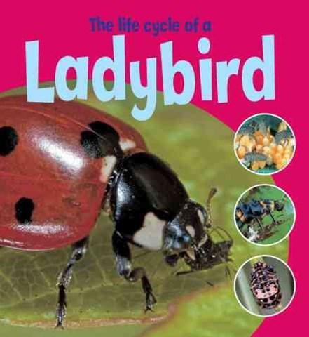 Learning About Life Cycles: The Life Cycle of a Ladybird