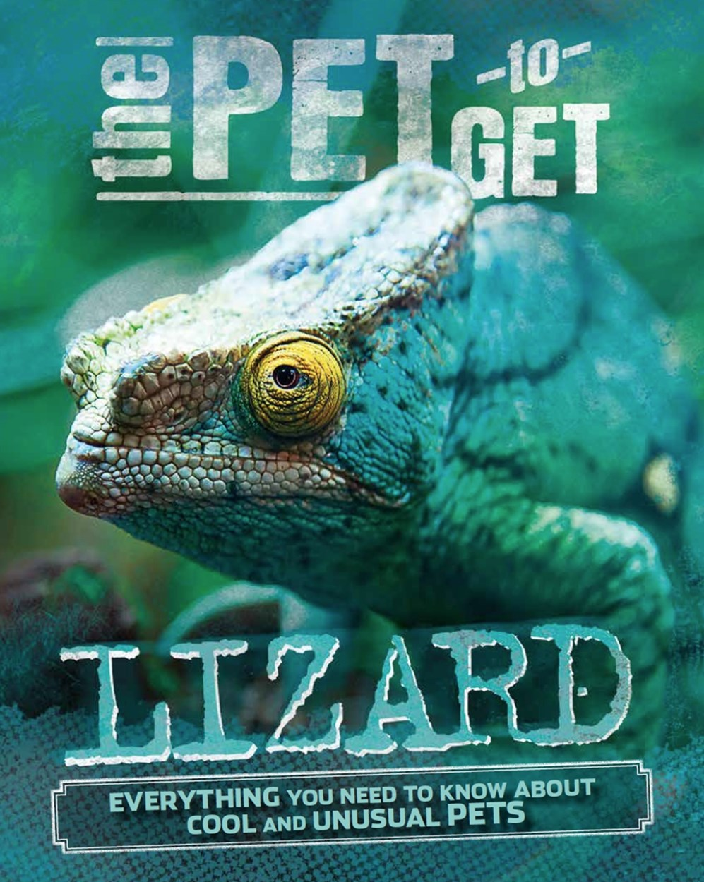 The Pet to Get: Lizard