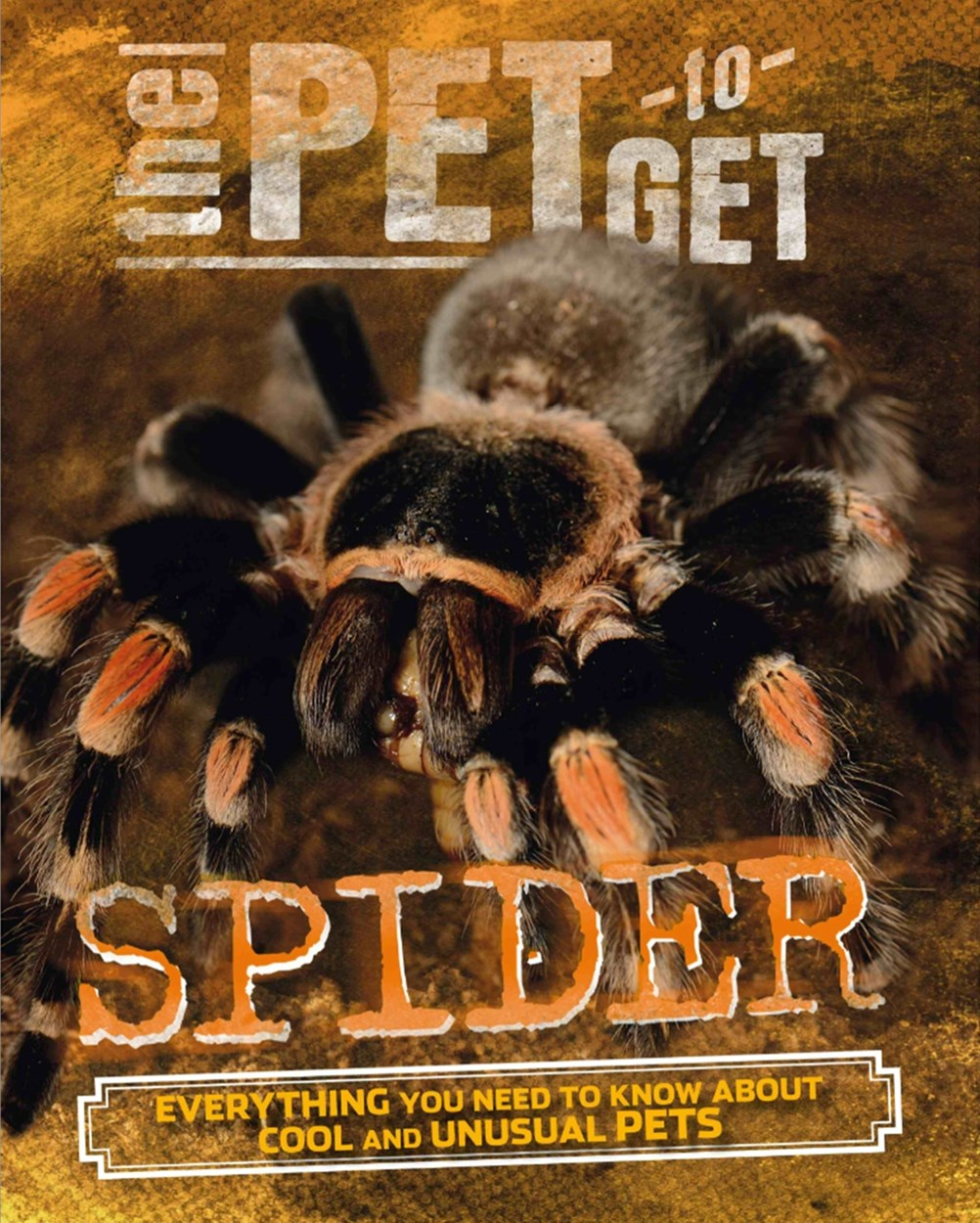 The Pet to Get: Spider