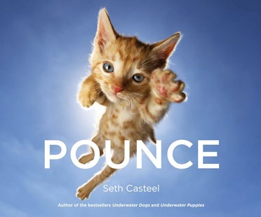 Pounce by Seth Casteel (9780751566291) - HardCover - Art & Architecture General Art