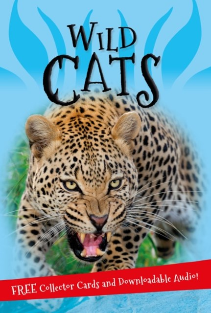 Its All About...Wild Cats