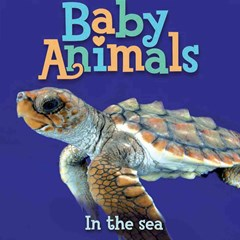 Baby Animals - In the Sea