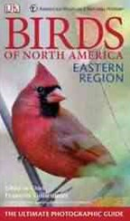 Birds of North America Eastern Region