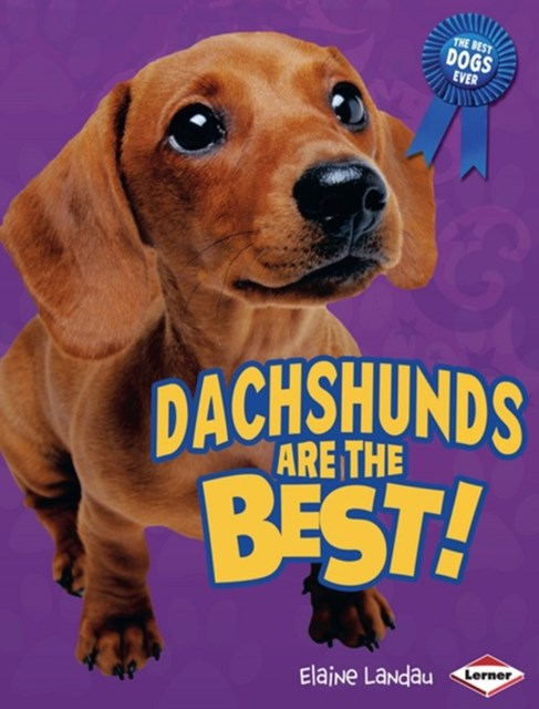 Dachshunds Are the Best!