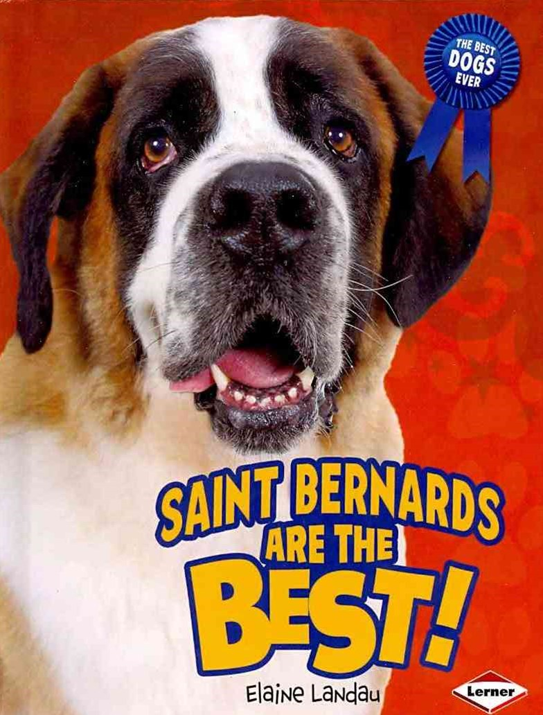 Saint Bernards Are the Best!