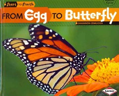 From Egg to Butterfly