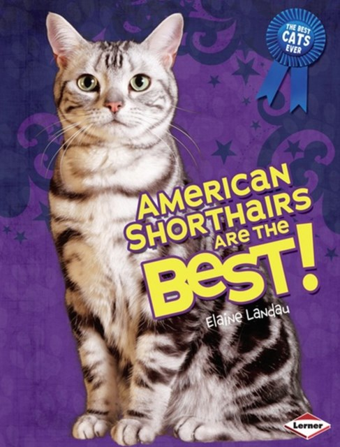 American Shorthairs Are the Best!
