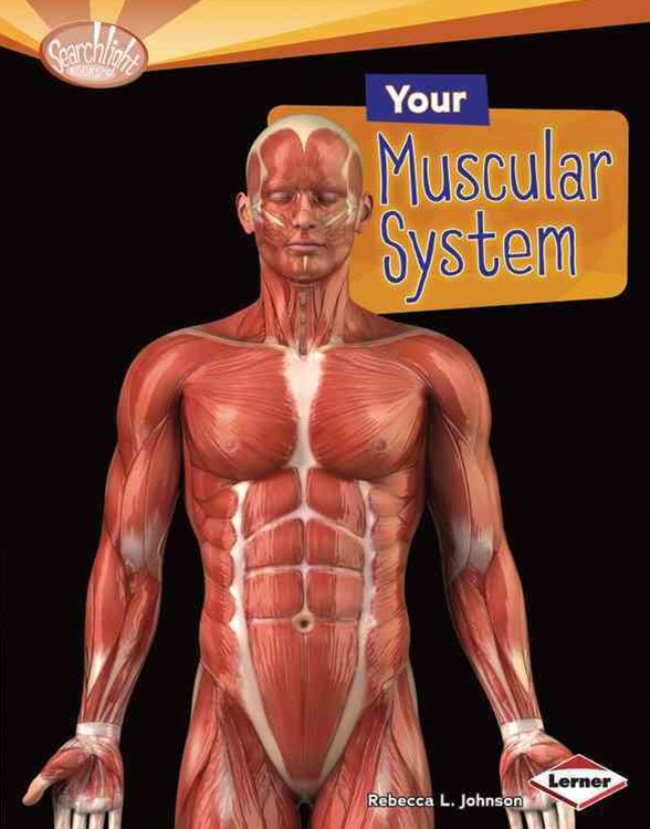 Your Muscular System