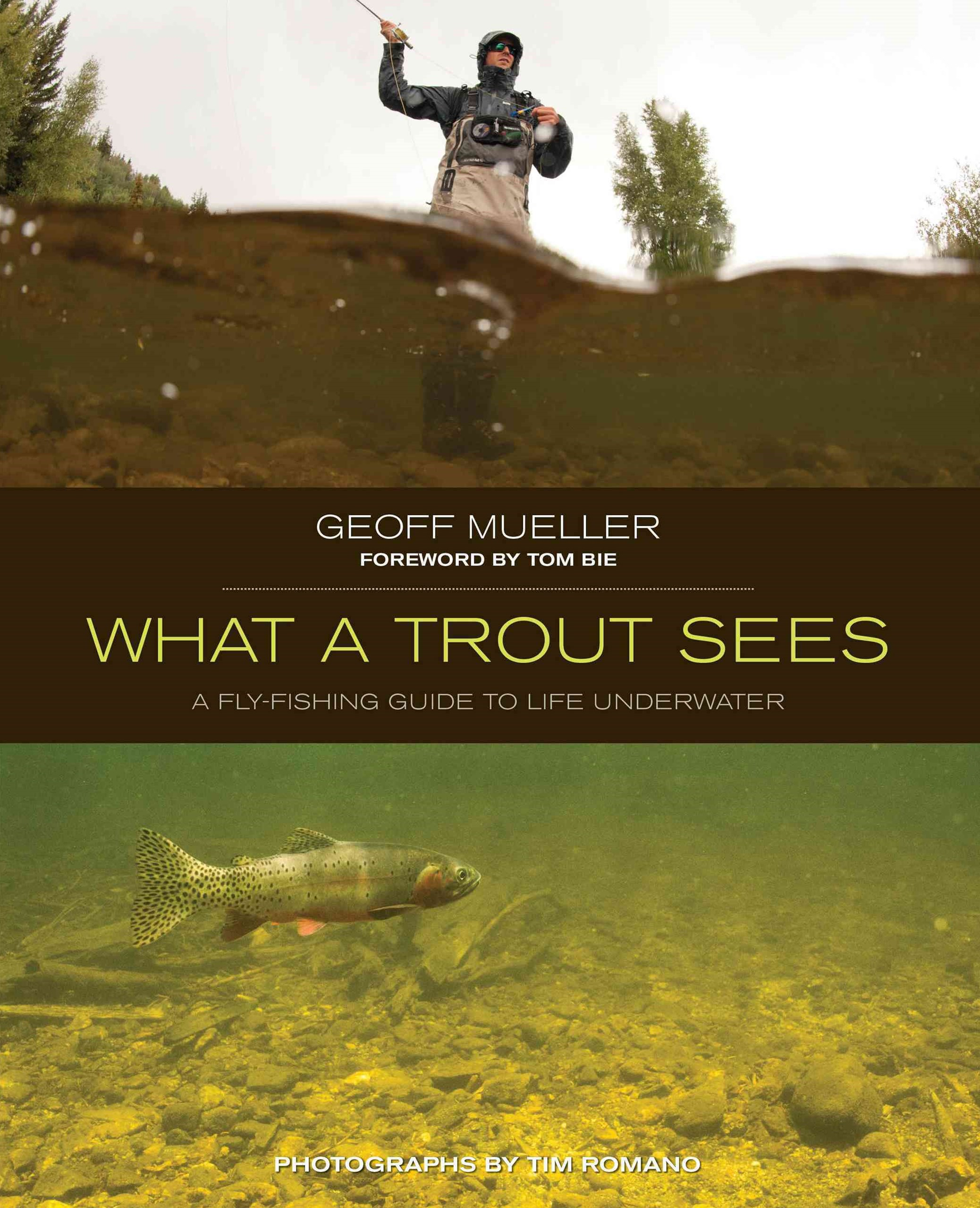 What a Trout Sees