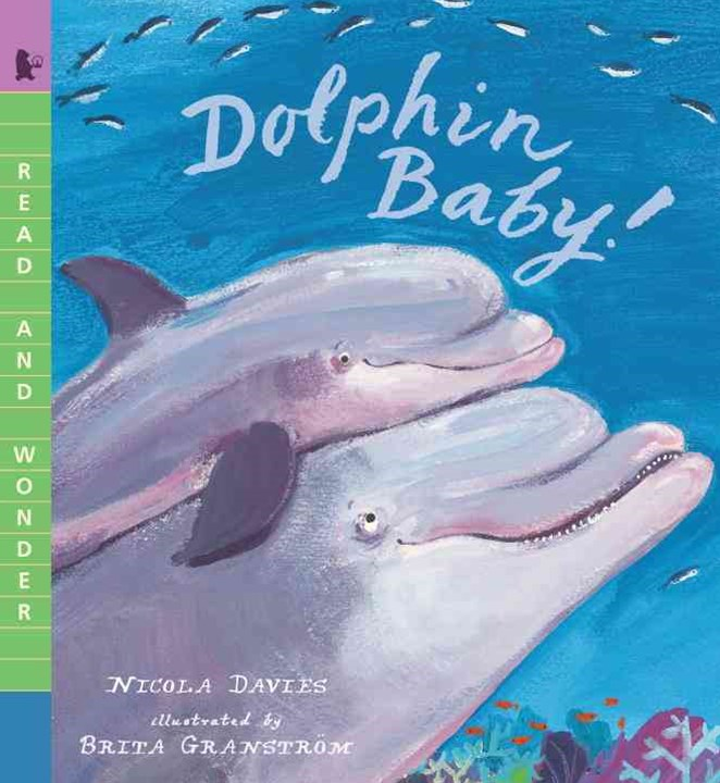 Dolphin Baby!