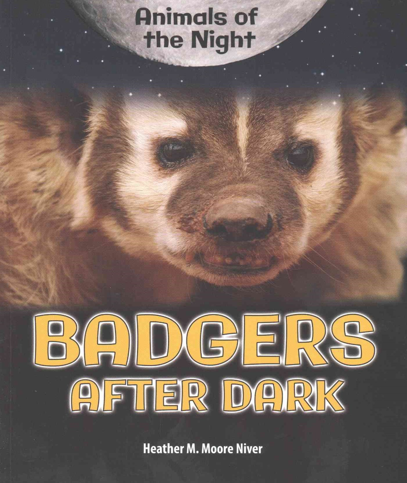 Badgers after Dark