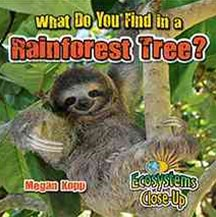 What Do You Find in a Rainforest Tree?