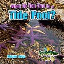 What Do You Find in a Tide Pool? - Ecosystems Close-Up
