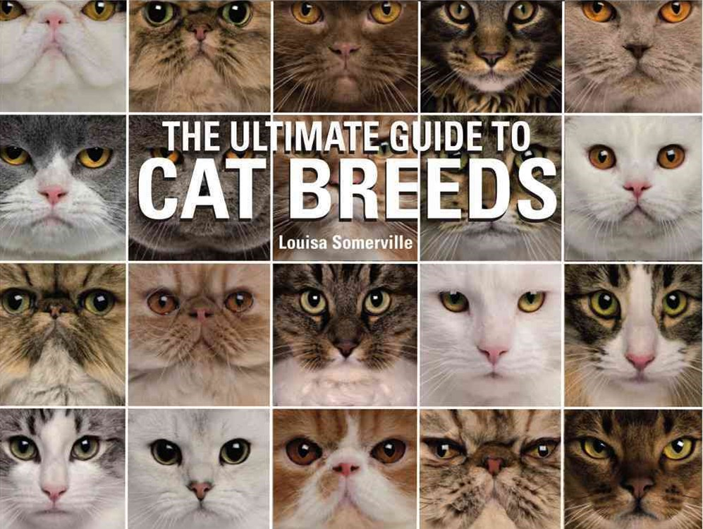 The Ultimate Guide to Cat Breeds