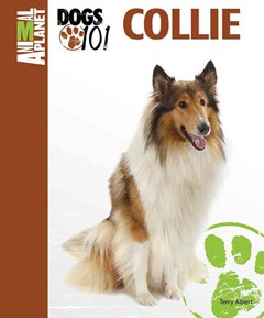 Collie Animal Planet