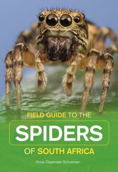 Field Guide to South African Spiders