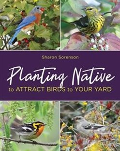 Planting Native to Attract Birds to Your Yard by Sharon Sorenson (9780811737647) - PaperBack - Home & Garden Gardening