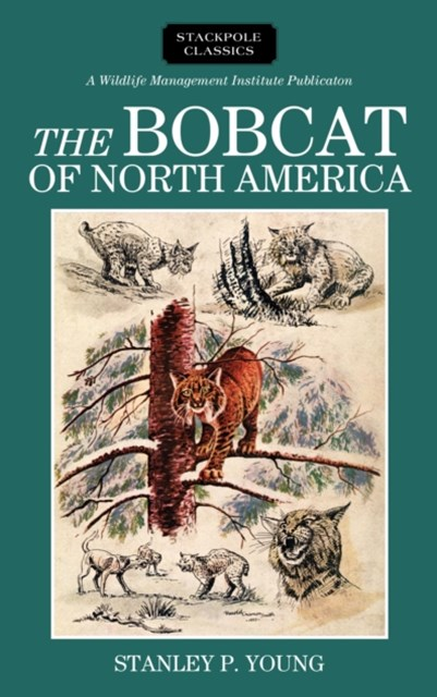 Bobcat of North America