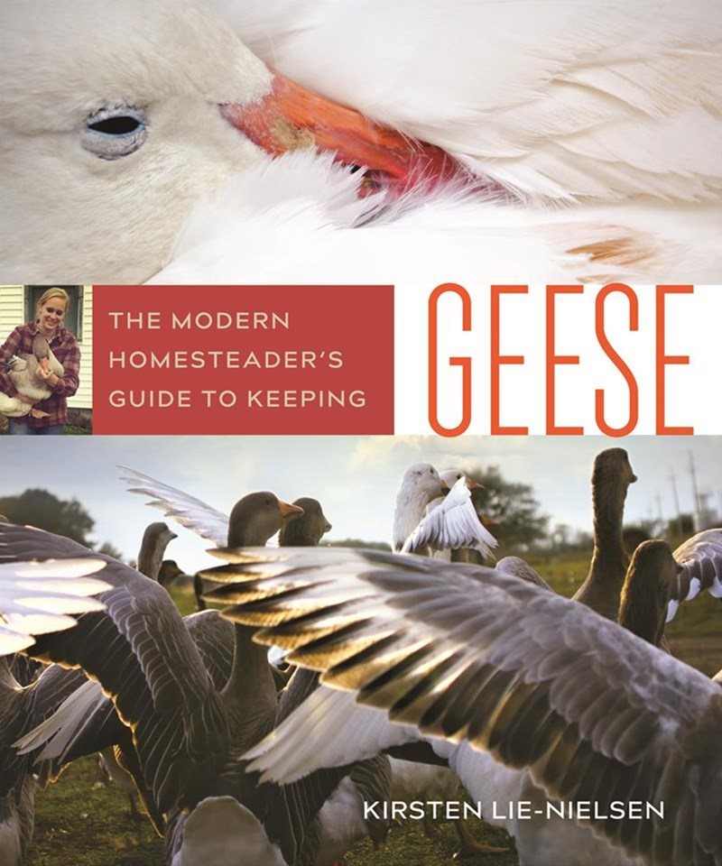 The Modern Homesteaders Guide to Keeping Geese