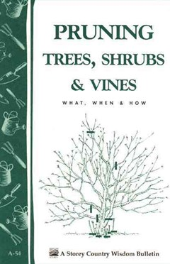 Pruning Trees, Shrubs and Vines: Storey