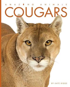 Amazing Animals: Cougars