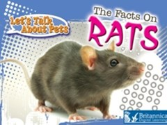 Facts on Rats