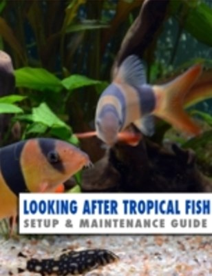 Looking After Tropical Fish: Setup & Maintenance Guide