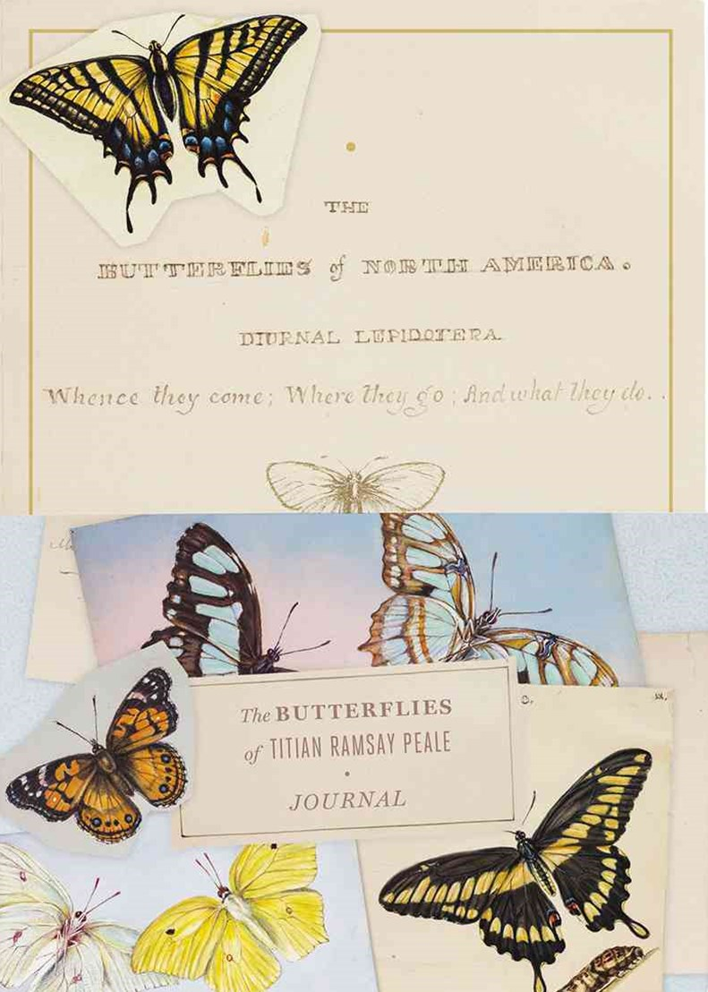 Butterflies of Titian Ramsay Peale Journal