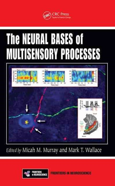 Neural Bases of Multisensory Processes