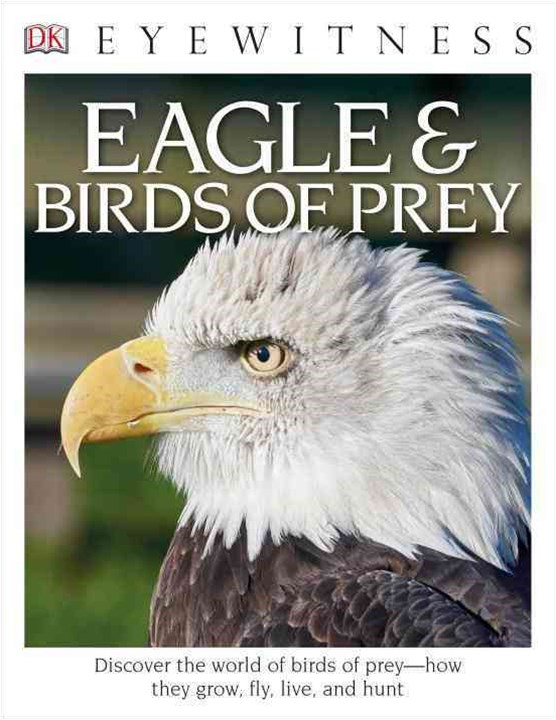 Eagles and Birds of Prey