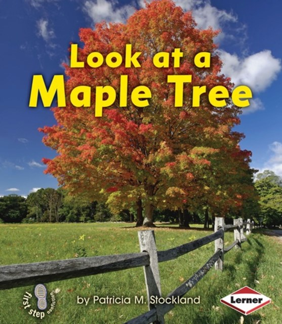 Look at a Maple Tree