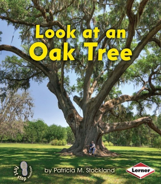 Look at an Oak Tree